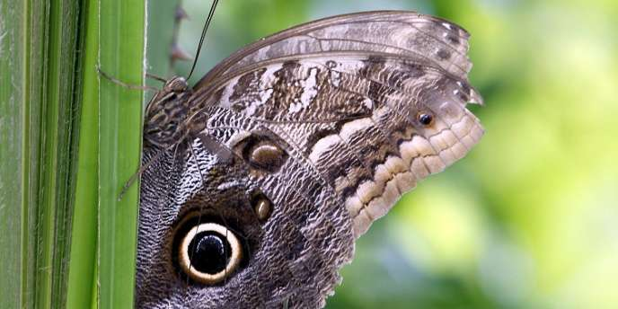 En vingt ans, la moitié des papillons des prairies ont disparu en Europe.
