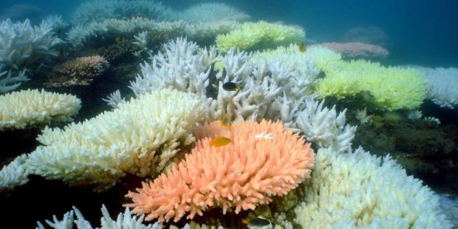 Le 16 juillet, deux chasseurs américains ont largué quatre bombes sur la Grande Barrière de corail.