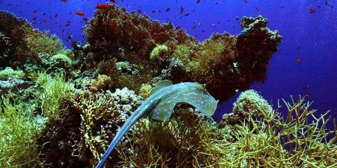 Selon une vaste étude publiée dans Nature Climate Change, les espèces marines se déplacent en moyenne de 72 km par décennie vers des latitudes plus élevées, du fait du réchauffement climatique.