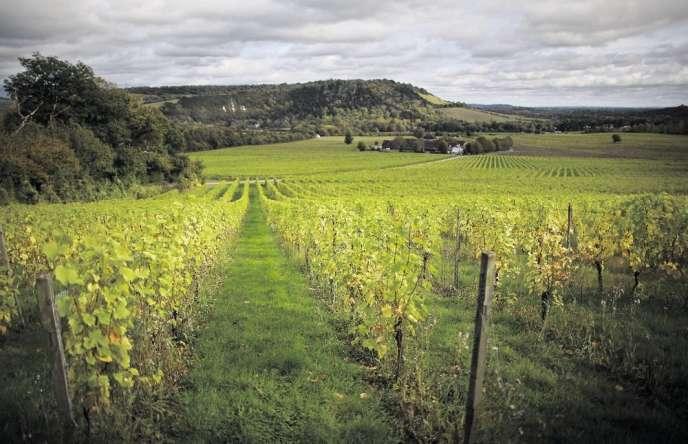 Le domaine Denbies, premier vignoble anglais, à Dorking (Surrey).
