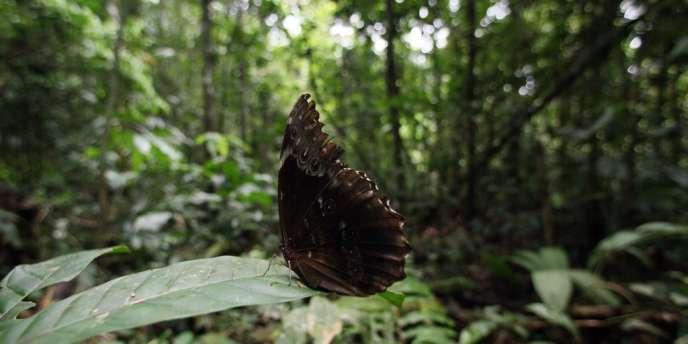 La biodiversité du parc national Yasuni en Equateur est riche de quelque 4000 espèces végétales et plus de 1000 espèces animales.