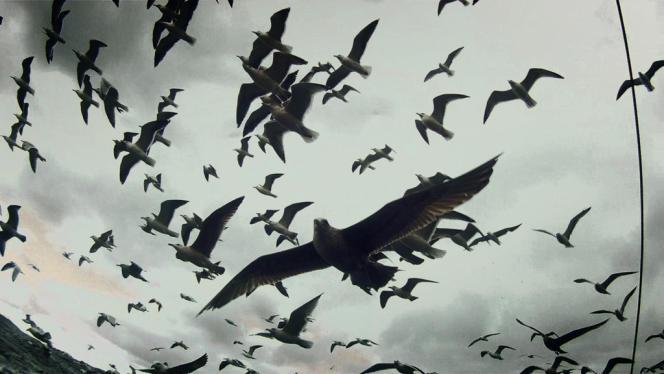 Devant les centaines de mouettes, on replonge dans le cauchemar des