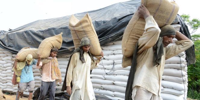 Des paysans indiens transportent des sacs de blés de l'aide alimentaire, le 27 août.