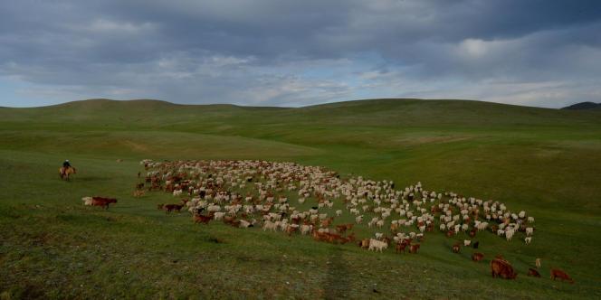 Le surpâturage est en effet la principale cause de la désertification des steppes mongoles.