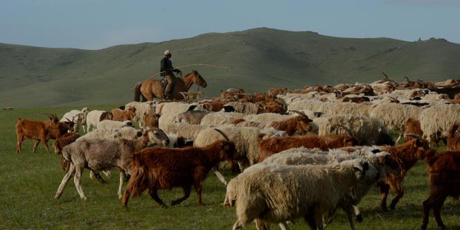 Selon les coutumes nomades du pays, les éleveurs mongols se déplacent de pâturage en pâturage au rythme des transhumances.