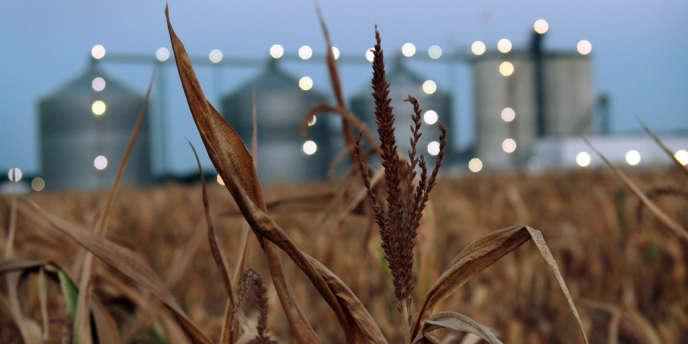 Un champ de maïs dans l'Illinois.
