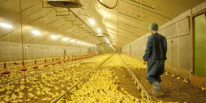 Elevage de volailles Doux à Le Merzer (Côtes-d'Armor). Le groupe a été placé en redressement  judiciaire le 1er juin 2012.