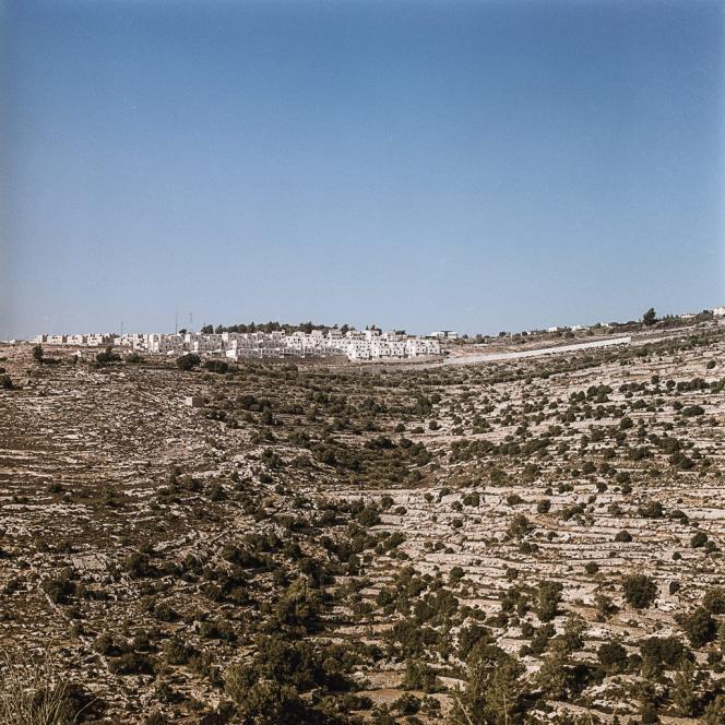 Les cultures doivent résister face à un envahisseur d'un autre type : le sapin, planté par les Israéliens (ici, les faubourgs de Jérusalem vus du village), qui acidifie les terres et menace les oliviers.