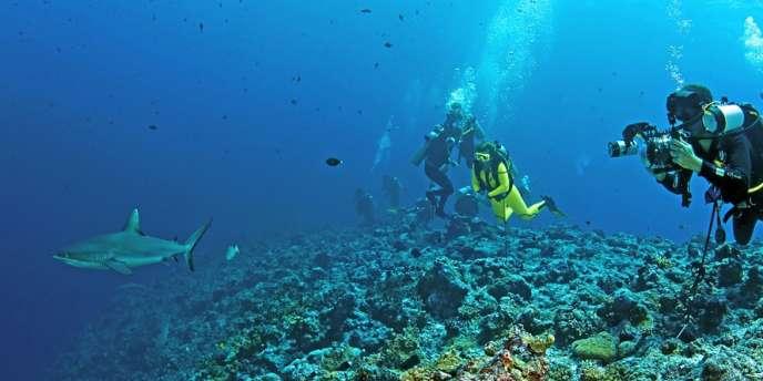 Les équipes de l'AIMS étudiant l'impact de la surpêche des requins sur le déclin des coraux.