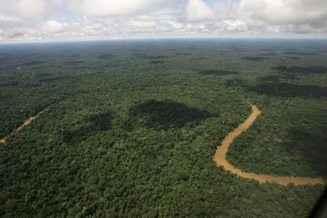Le parc national Yasuní est une réserve naturelle riche en biodiversité, composée d'un million d'hectares de forêt tropicale humide.