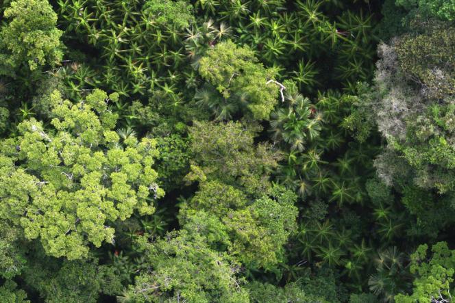 La forêt amazonienne compte 390 milliards d'arbres.