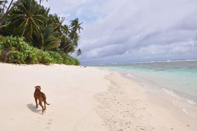 L'île déserte indonésienne du Web Robinson Gauthier Toulemonde qui poursuit son expérience de télétravailleur de l'extrême.