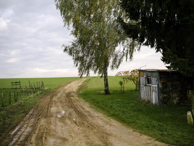 Le chemin de Nully (Haute-Marne) sur lequel le loup a été photographié le 13 septembre.