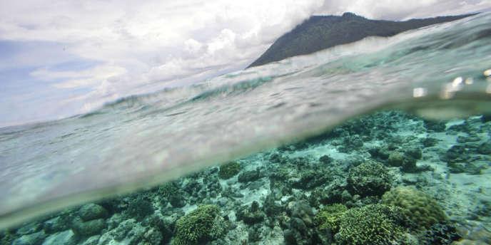 Corail dans une aire protégée à Sulawesi en Indonésie.