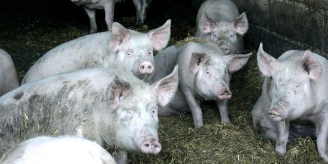 Avec la densification de l'élevage s'est posée la question du traitement des rejets.