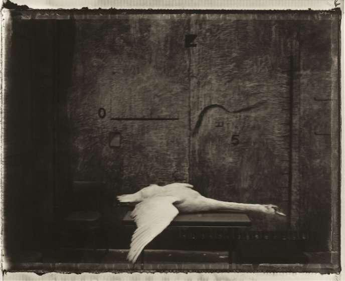 Langage de cygnes, 2000. Exposition