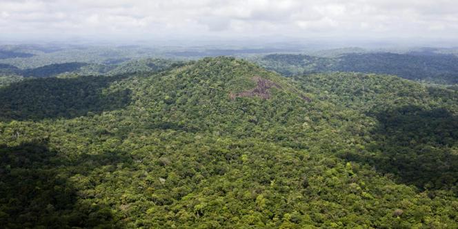 La forêt amazonienne, en 2008.