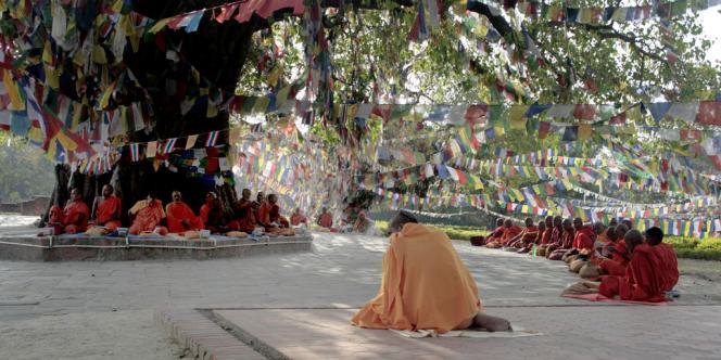 L'arbre sacré qui marque le lieu de naissance du Bouddha, à Lumbini (Népal).
