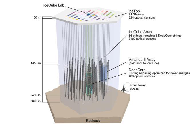 Vue en coupe du détecteur de neutrinos IceCube.