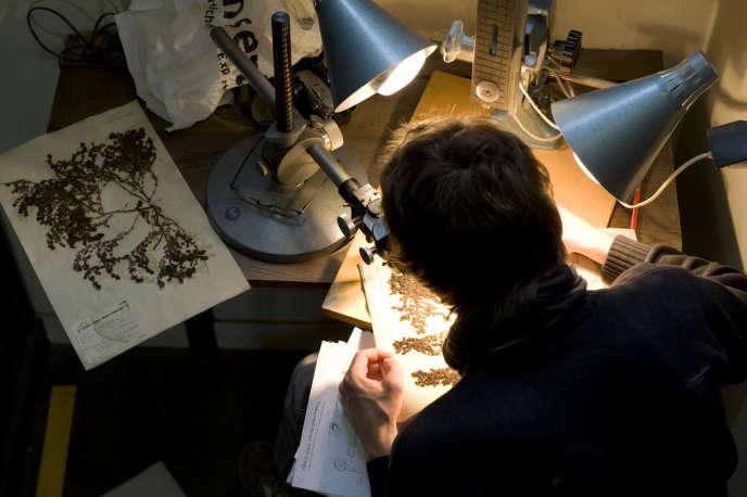 Lors du grand chantier de rénovation de l'herbier de Muséum national d'histoire naturelle, en avril 2010.