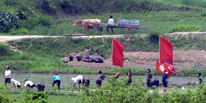 Des agriculteurs nord-coréens au champ, à Panmunjeom, vus depuis la Corée du Sud, en 2005.