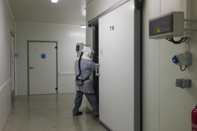 Les secrets de fabrication de Biotop son jalousement protégés dans des salles réfrigérées. Ici, un élevage de bourdons.