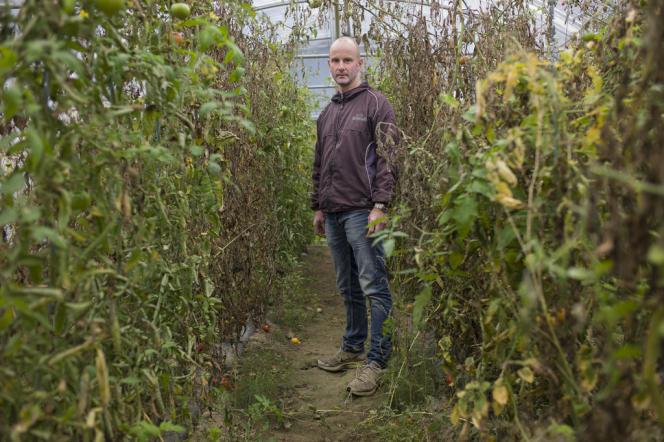 Cultivateur bio à Loriol (Drôme), Cyril Vignon inspecte les serres où il a disséminé de minuscules punaises, afin de protéger ses tomates et ses aubergines des dégâts causés par les mouches blanches.