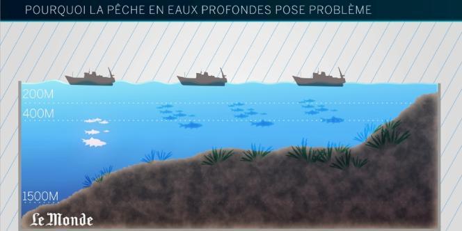 Comprendre les dégâts écologiques de la pêche profonde en moins de deux minutes.