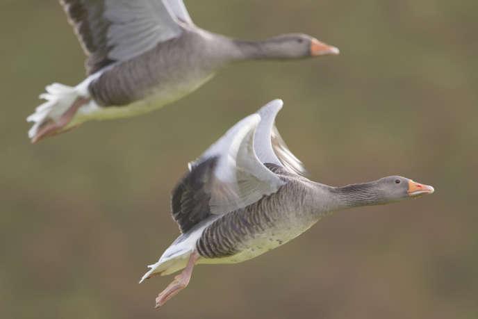 La Pateria de Sousa est la seule exploitation de foie gras bio homologuée en Europe, et sans doute dans le monde.