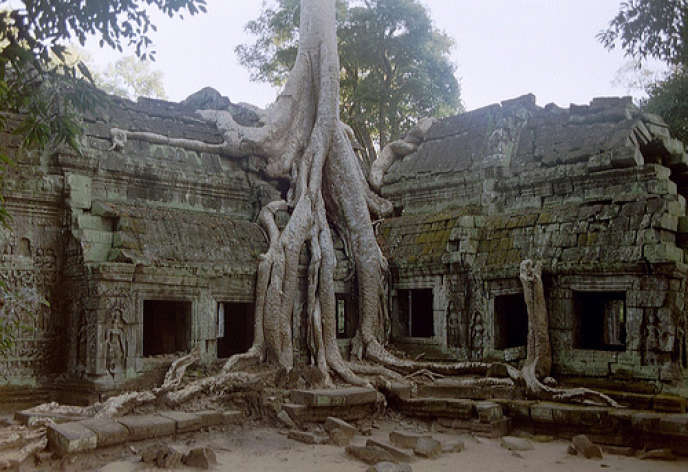 Temple Ta Prohm, à Angkor.