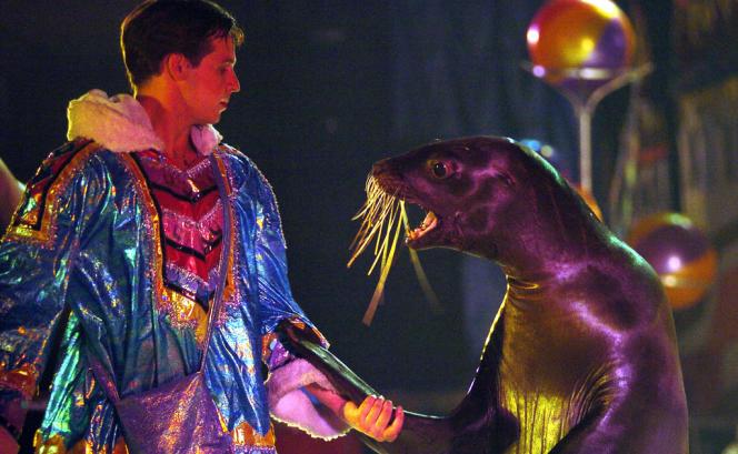 En France, les otaries et lions de mer doivent bénéficier de piscines intérieures et extérieures.