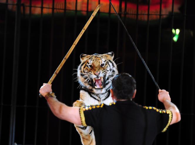 Le dresseur de tigre italien Darix Togni, lors d'une représentation en Hongrie.