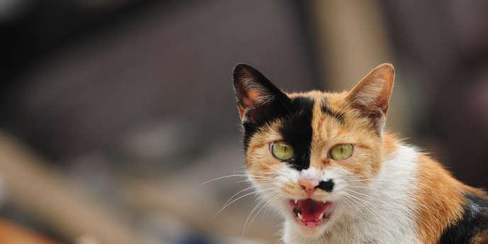 La présence du chat est attestée en Chine vers 5300 avant J.-C.