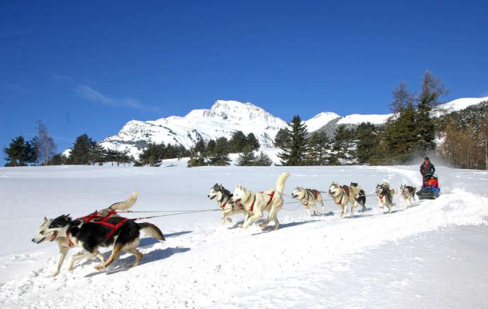 Après une quinzaine de minutes, une certaine connivence s'installe entre les chiens et le musher.