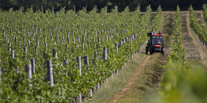 Les groupements fonciers viticoles (GFV) sont des sociétés civiles qui achètent des parcelles de vigne grâce à l'épargne de particuliers.
