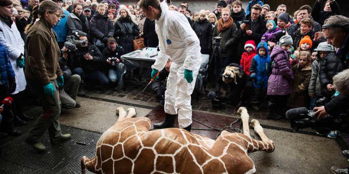 Le 9 février, une première girafe avait été mise à mort dans un zoo danois.