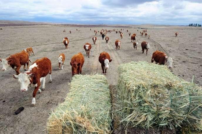 Sécheresse dans un ranch californien, lundi 3 février.