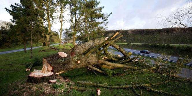 Un arbre arraché à Pont-de-Buis, le 15 février.