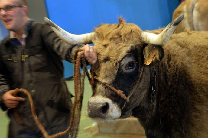Le Salon de l'agriculture se tient du se tient du 22 février au 2 mars, au Parc des expositions à Paris, porte de Versailles.