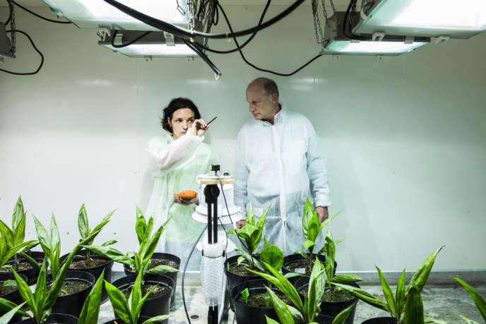 Supp Municipales 2014 - Montpellier - Dans les serres au CIRAD (Centre de coopération internationale en recherche agronomique pour le développement). En partenariat avec les pays du Sud, le Cirad produit et transmet de nouvelles connaissances et de nouvelles technologies de développement agricole. Ici une recherche est mené sur l'huile de palme.