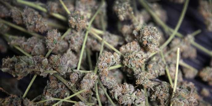 Du cannabis à Denver, en février 2014.