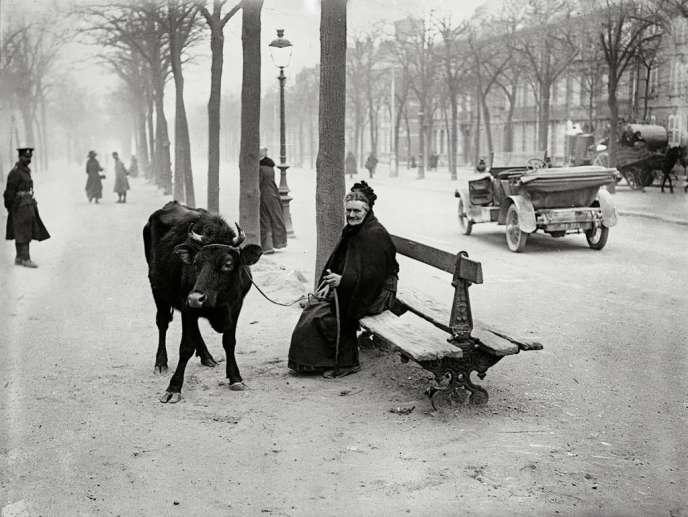 Après avoir fui la zone des combats, une vieille dame se réfugie à Amiens avec la seule chose qui lui reste : une vache. Photo prise le 28 mars 1918.