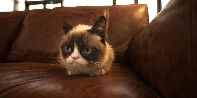 Grumpy Cat à Austin, Texas, lors du festival South by Soutwest.