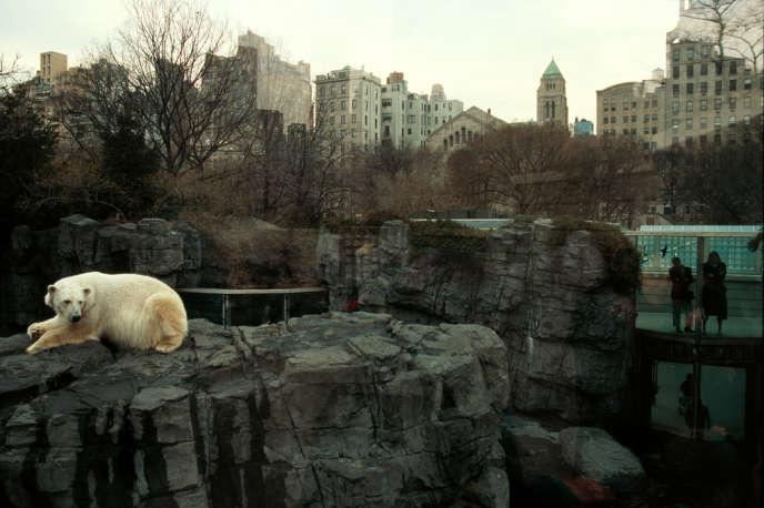 New York, 1994. Zoo de Central Park.