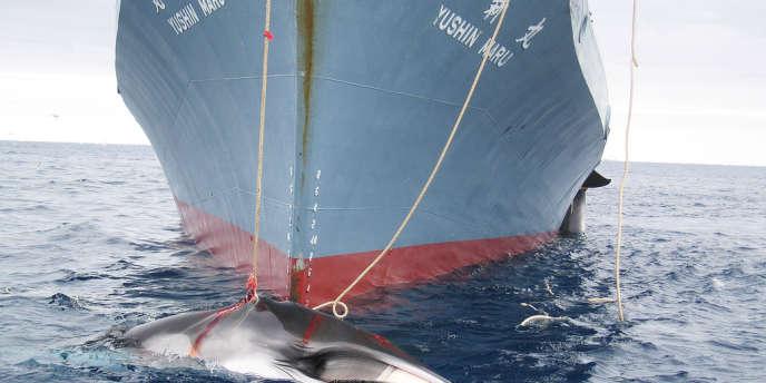 Un baleinier japonais, dans l'océan Antarctique, en février 2008.