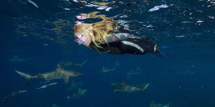 Sur le banc de sable d'Aliwal en Afrique du Sud, une multitude de requins bordés, taureaux, tigres, marteaux ou encore requins baleines se donnent rendez-vous pour profiter des