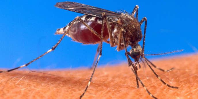 Chikungunya : « Le pic de l'épidémie est encore devant nous »