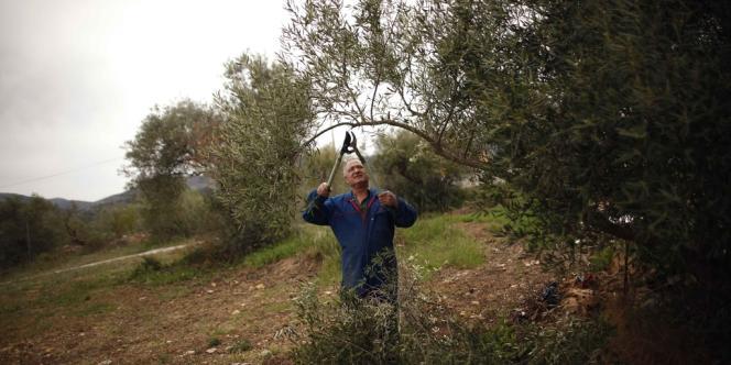 Dans une oliveraie près de Malaga, le 9 avril.