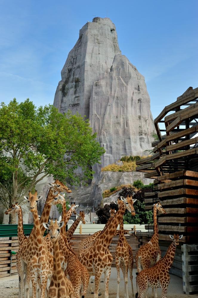 Les girafes du parc de Paris-Vincennes devant le célèbre rocher qui abrite... un château d'eau.