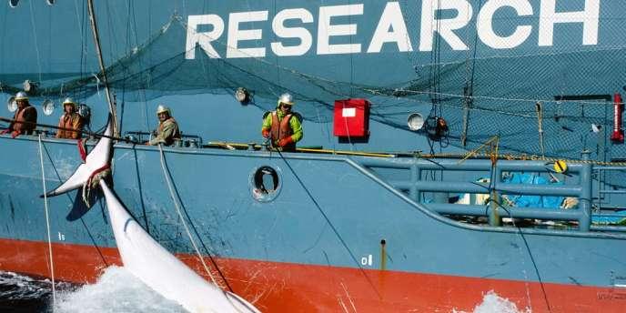 Après l'avis rendu de la Cour internationale de justice (CIJ), la plus haute instance judiciaire de l'ONU, l'Agence des pêches japonaise avait indiqué qu'elle annulait sa prochaine expédition annuelle qui aurait dû démarrer cet hiver pour deux ou trois mois.